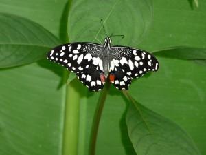 Dagje uit vlindertuin 2012.1