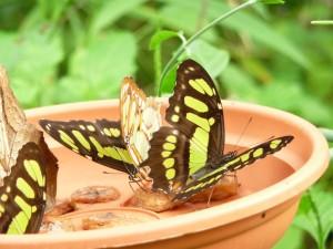Dagje uit vlindertuin 2012.2